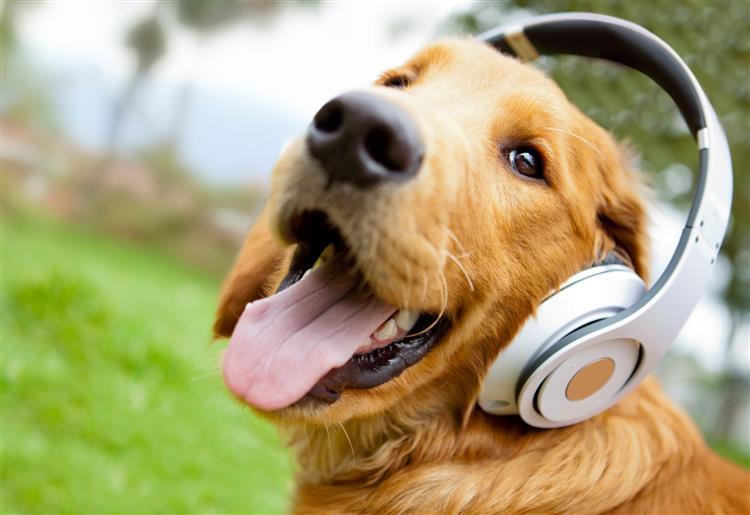 O 'iPod para cães' que ajuda os animais a lidar com a ansiedade
