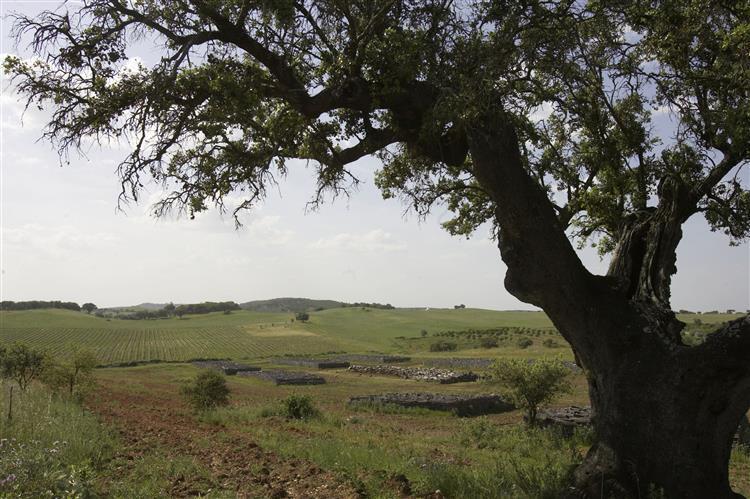 Agricultor obrigado a pagar multa até 85 mil euros por limpar um terreno
