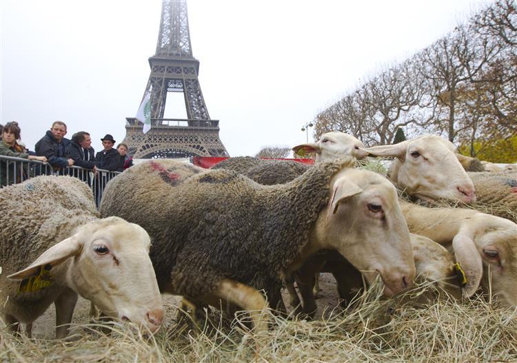 Ovelhas protestam junto à Torre Eiffel