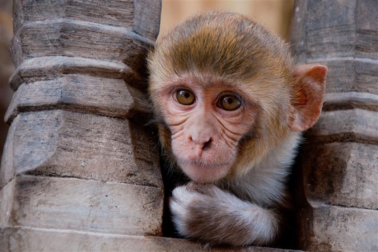 Macaco salva a vida de amigo electrocutado [vídeo]