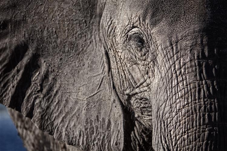 Catorze elefantes morreram envenenados no Zimbabué