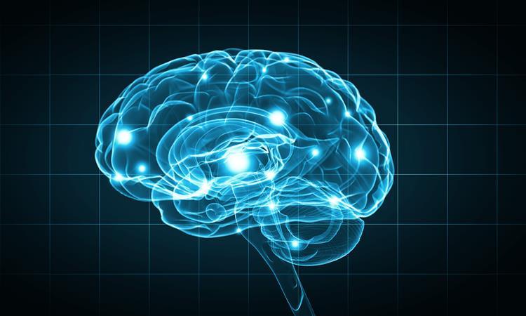 Descoberto princípio universal da organização das línguas no cérebro