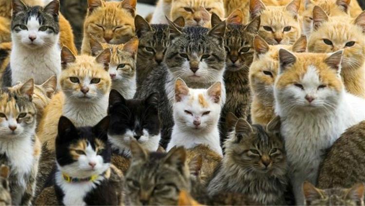 Conheça a ilha japonesa que foi invadida por gatos [vídeo]