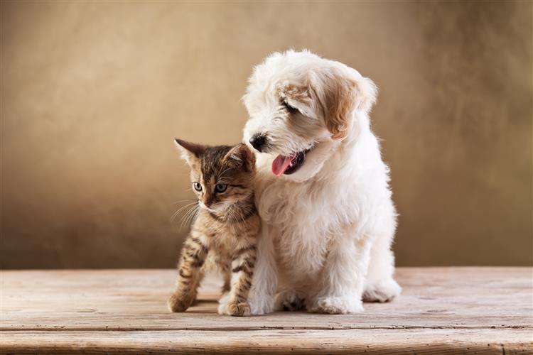 Sabe que doenças pode apanhar através do seu animal doméstico?