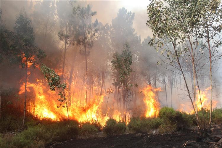Parados os cinco helicópteros kamov de combate a incêndios florestais