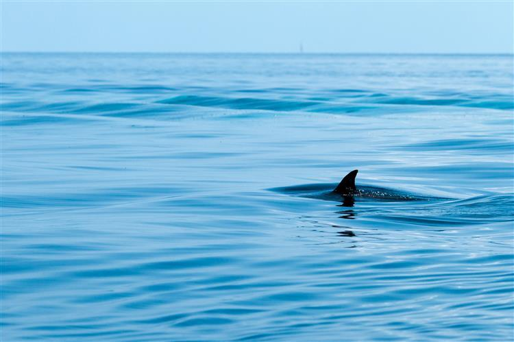 Austrália. Surfista atacado por tubarão está em estado grave