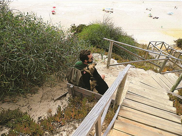 Cães de praia