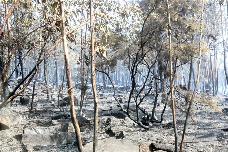 Mais de quatro mil incêndios rurais em agosto