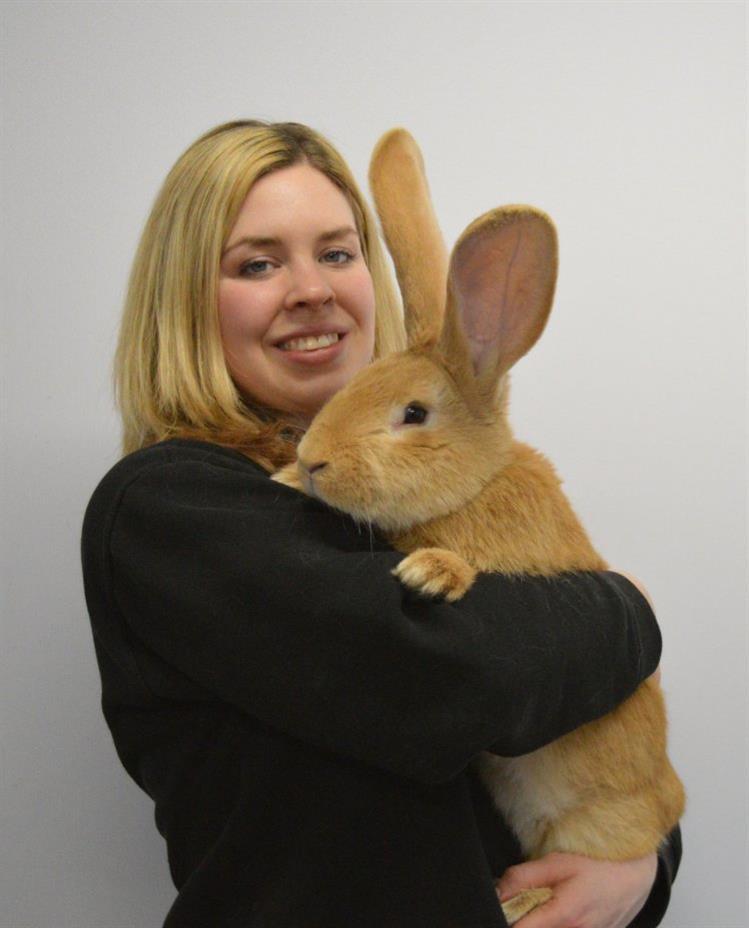 Este coelho gigante está à procura de um novo dono
