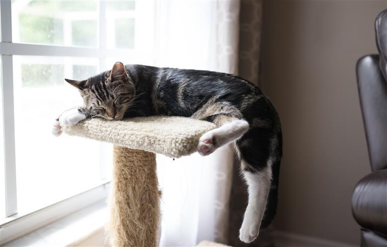 Sabe quantas vezes por dia deve alimentar o seu gato?